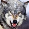twilightwolf69